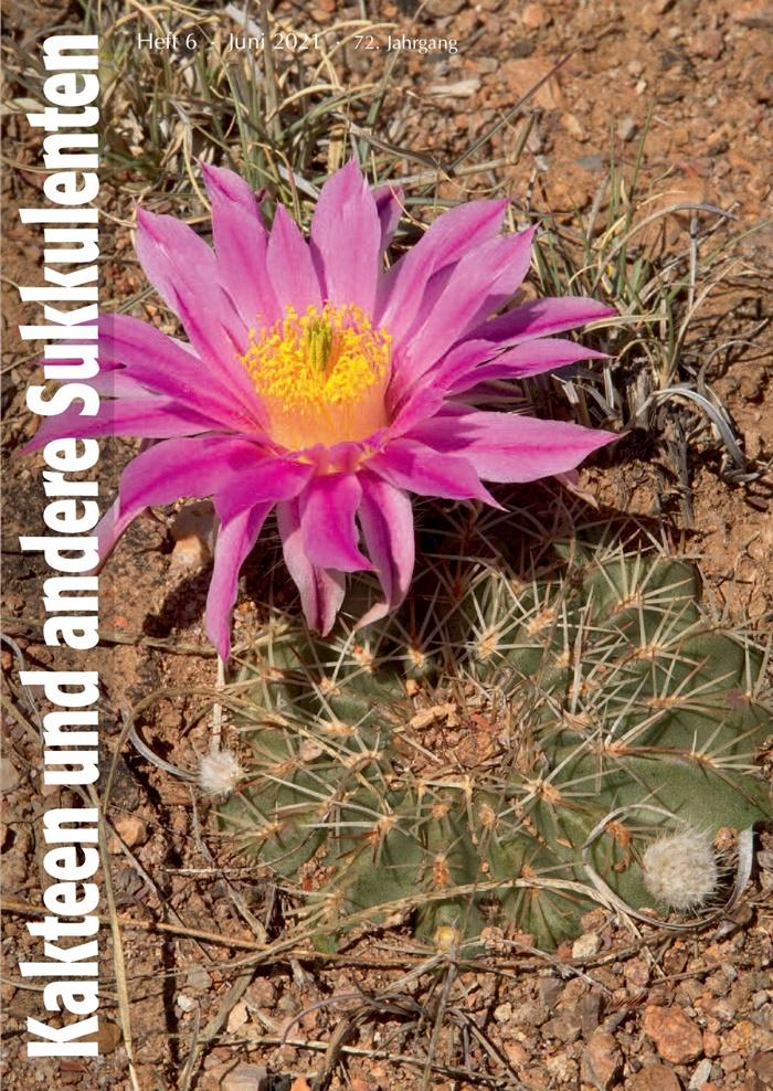 Titelbild: Echinocereus pulchellus subsp. weinbergii (Foto: Johann Strobl)